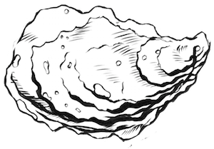 oyster.5